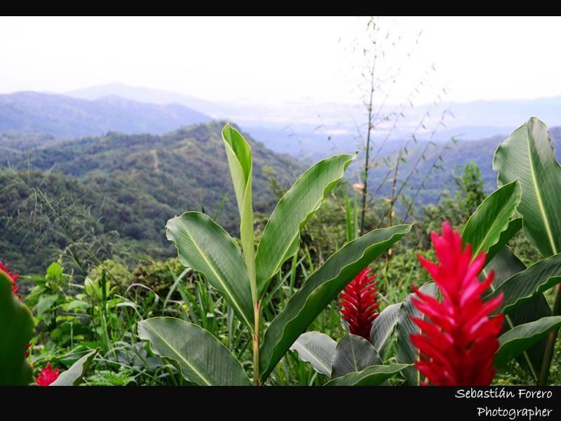 Rancho de la Luna, Minca, Santa Marta, Colombia, cheap lodging in Santa Marta
