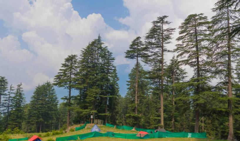 Travelosic Forest Campsite, Man?li (Manali), India hotels and hostels 6 photos