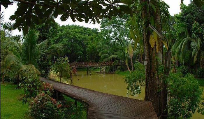 Sepilok Jungle Resort - Search for free rooms and guaranteed low rates in Sandakan 14 photos