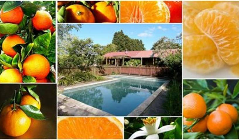 Kerikeri Farm Hostel - Search available rooms for hotel and hostel reservations in Kerikeri 13 photos