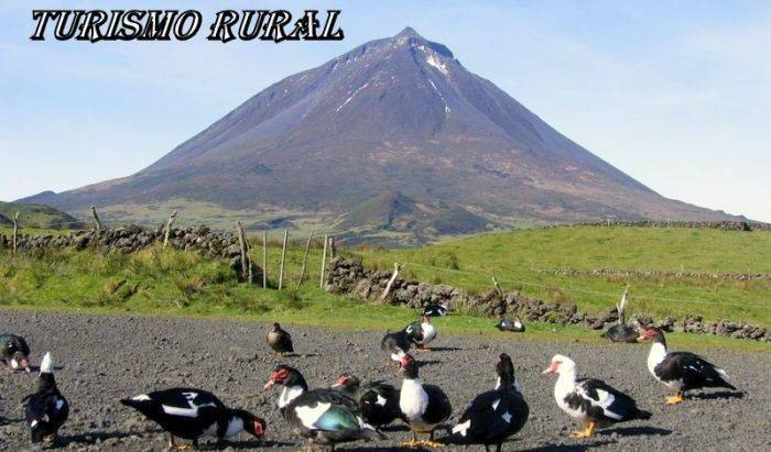 Casas do Canto - Search for free rooms and guaranteed low rates in Sao Roque do Pico, holiday reservations 9 photos