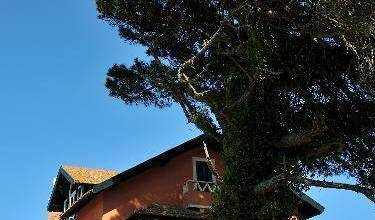 The House of the She Pine Tree - Search available rooms for hotel and hostel reservations in Sintra 14 photos
