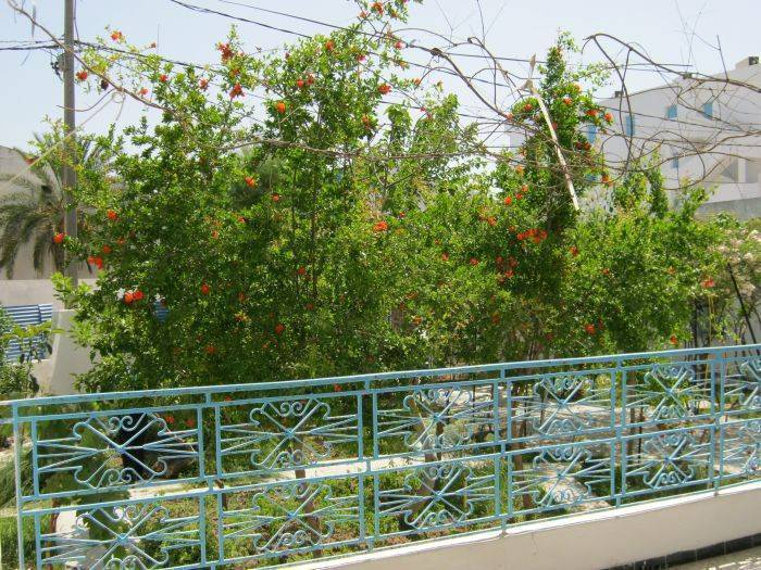 Tunis Villa B and B, Dar Naheli, Tunisia, travel hostels for tourists and tourism in Dar Naheli