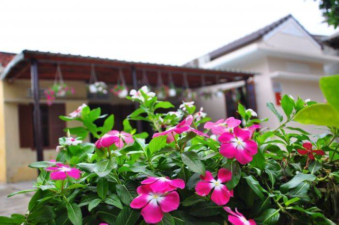 Petunia Garden Homestay, Hoi An, Viet Nam, newly opened hotels and hostels in Hoi An