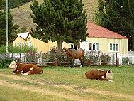 Estancia La Quinta, El Chalten, Argentina, excellent holidays in El Chalten