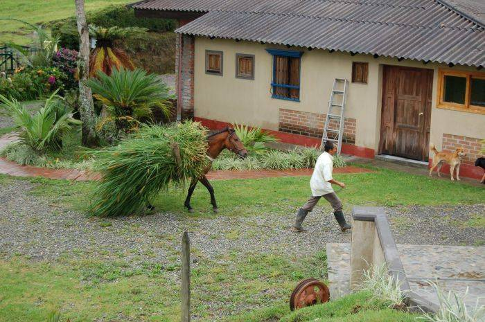 La Serrana Eco Farm and Hostel, Salento, Colombia, hostels for road trips in Salento