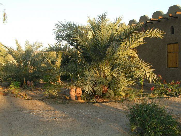 Desert Rose Eco Lodge, Badahl, Egypt, passport to savings on travel and hotel bookings in Badahl