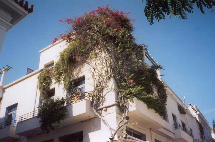 Student Travellers Inn, Athens, Greece, Greece hotels and hostels