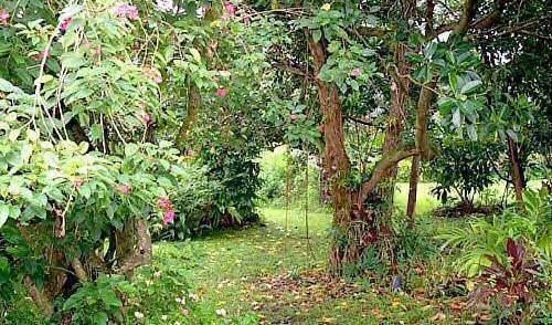 Hana Maui Botanical Gardens BnB - Bedava oda ara ve garantili düşük tarifeleri ara Hana 16 fotoğraflar