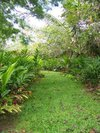 Hana Maui Botanical Gardens BnB, Hana, Hawaii, hotels, lodging, and special offers on accommodation in Hana