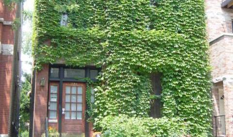 China Doll Guest House - Search for free rooms and guaranteed low rates in Chicago 14 photos
