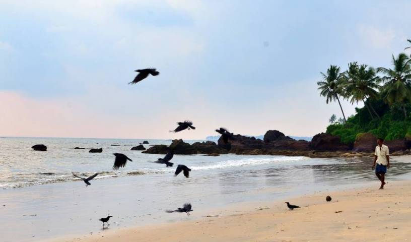 Ocean Green Kerala - Search for free rooms and guaranteed low rates in Cannanore, hotel bookings 2 photos