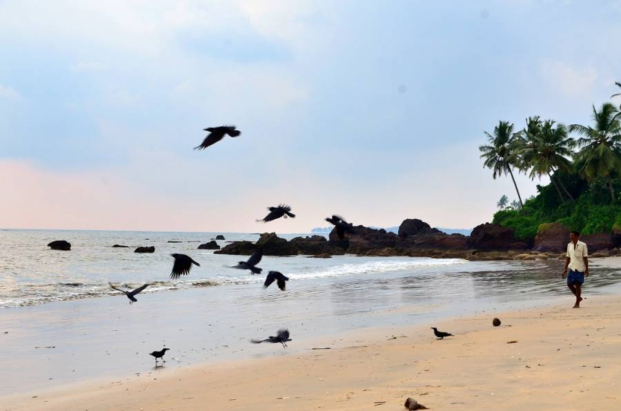 Ocean Green Home Stay, Cannanore, India, search for hotels, low cost hostels, B&Bs and more in Cannanore