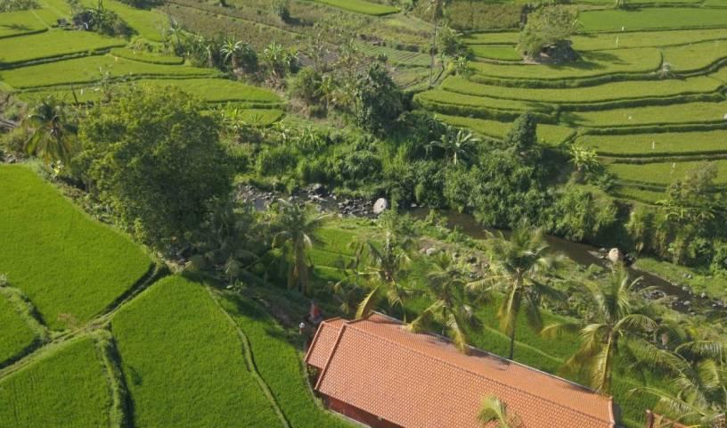 Lotus Guesthouse Sudaji 127 ảnh