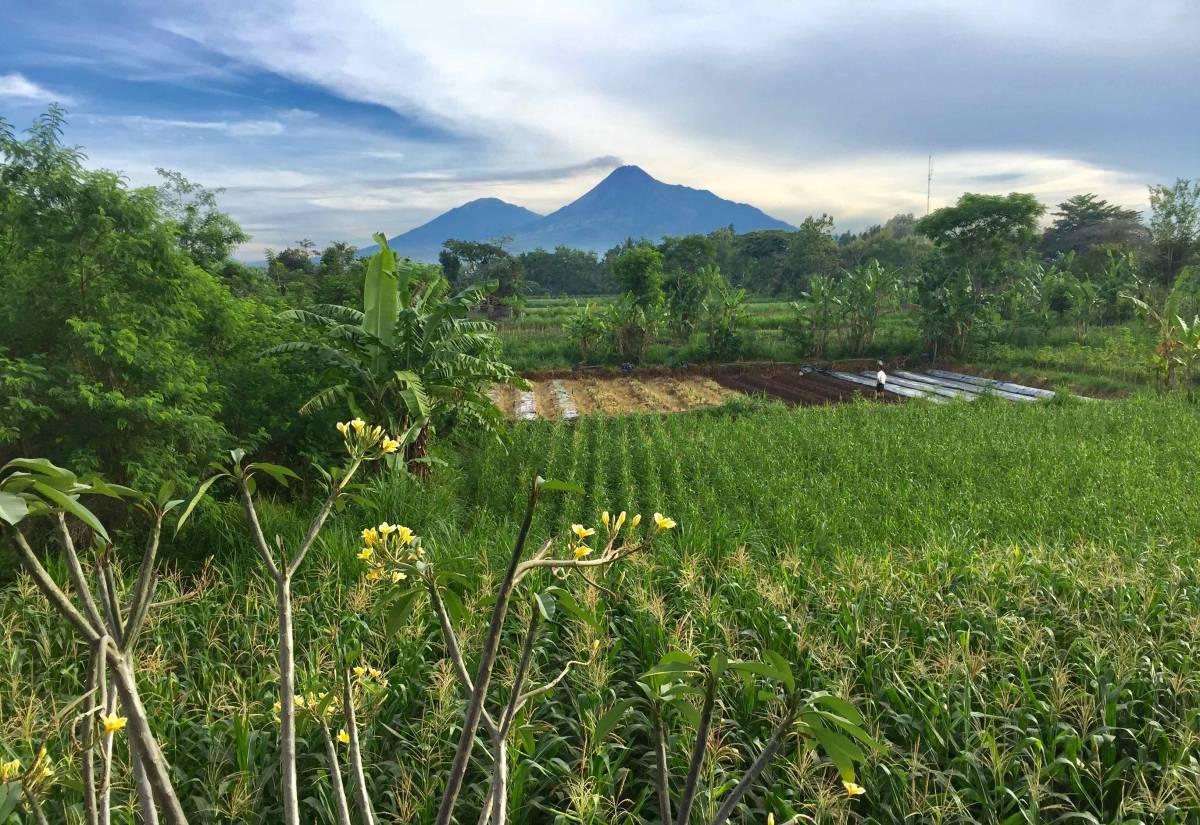 De Tropen Jogja, Yogyakarta, Indonesia, Indonesia hotel e ostelli