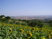 Il Sorger Del Sole, Cingoli, Italy, Italy hotels and hostels