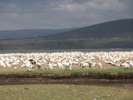 Nakuru Backpackers Hostel, Nakuru, Kenya, Kenya hostels and hotels