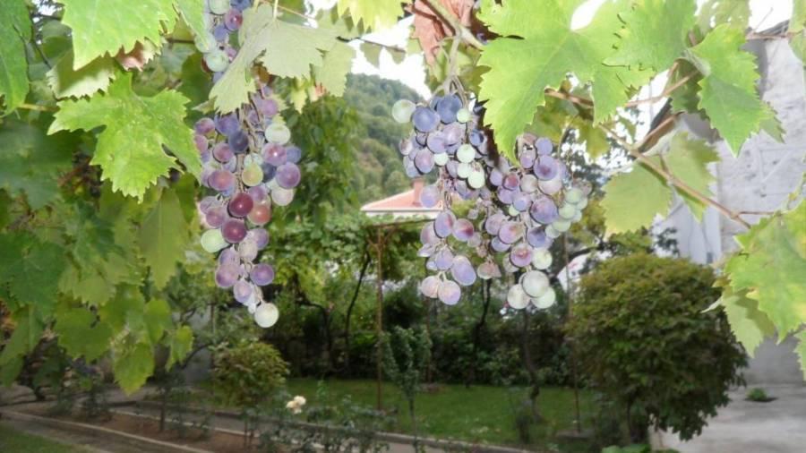 Vila Ilinden 1903 Dihovo, Bitola, Macedonia, najboljše lokacije v Bitola