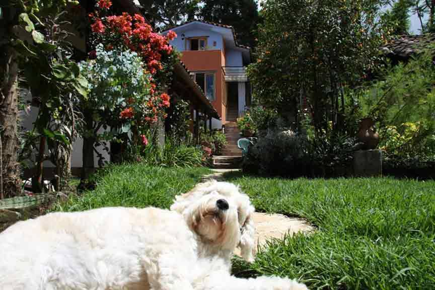 Bela's Bed and Breakfast, San Cristobal de Las Casas, Mexico, Mexico hostels and hotels