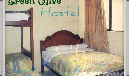 Olive Hostel - Search available rooms for hotel and hostel reservations in Bucharest 1 photo