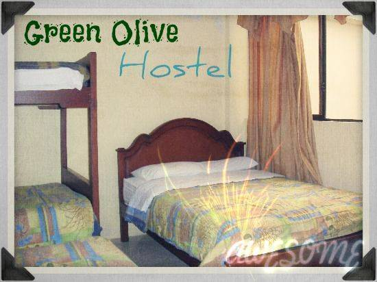 Olive Hostel, Bucharest, Romania, Romania hotels and hostels