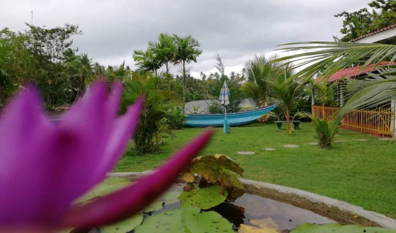 Bluewhale Lagoon Resort - Search available rooms for hotel and hostel reservations in Ahangama 19 photos