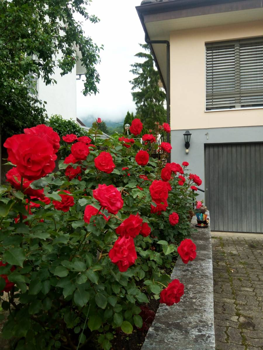 Privathaus, Oberbipp, Switzerland, hotellitarjoukset sisään Oberbipp